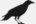 Corbeau de Grisaille en position haute de complot